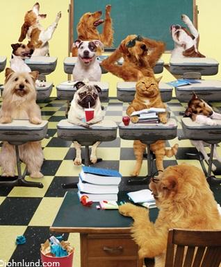 Classroom-Pets-Gone-Crazy